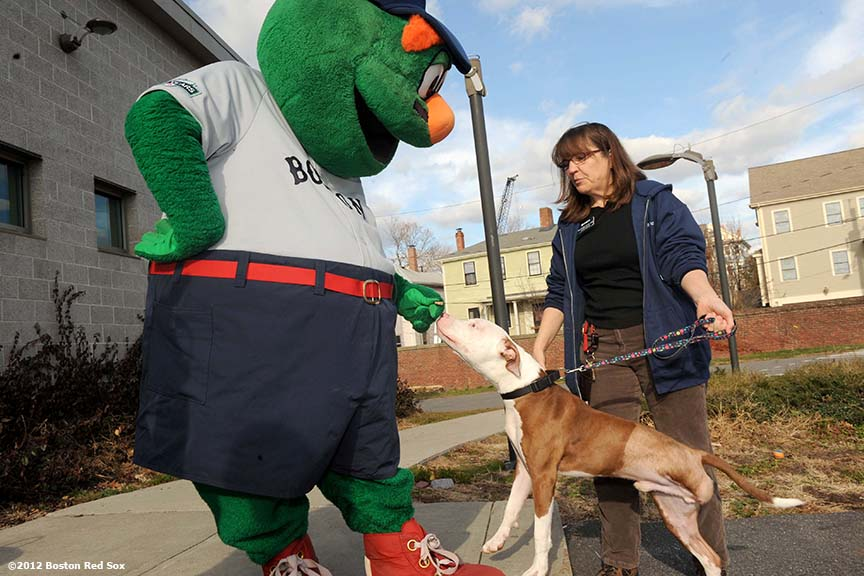 """Wally the Green Monster feeds a dog at the MSPCA in Boston, Massachusetts Wednesday, December 5, 2012. The Boston Red Sox visited the MSPCA to donate 1,000 bags of Fenway Park dog treats as part of the Red Sox 12 days of Christmas community acts."""