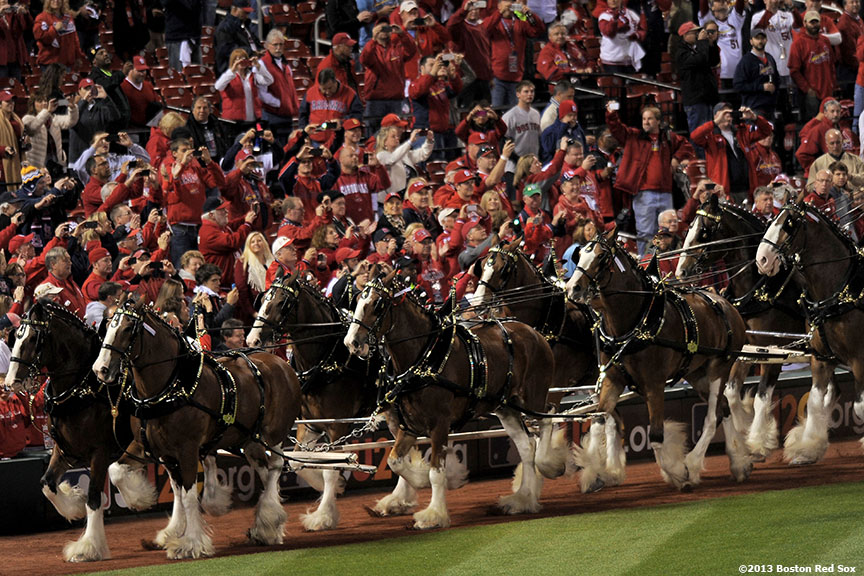 """Clydesdale horses take a lap around the field during a pre-game ceremony before game four of the 2013 World Series between the Boston Red Sox and the St. Louis Cardinals Sunday, October 27, 2013 at Busch Stadium in St. Louis, Missouri."""