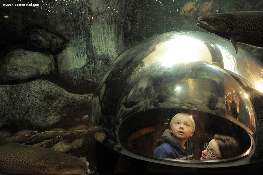 """A young boy and his mother observe fish in a fish tank at the L.L. Bean headquarters in Freeport, Maine Saturday, February 25, 2014 as part of a World Series trophy tour throughout Maine."""