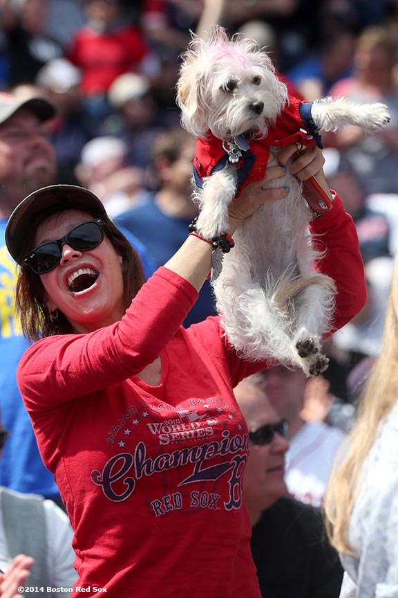 """A fan cheers as she holds her dog during a game between the Boston Red Sox and the Baltimore Orioles at Fenway Park in Boston, Massachusetts Monday, April 21, 2014."""