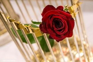 """A red rose is shown inside the 2013 Boston Red Sox World Series trophy during a Boston Red Sox Valentine's Day caravan to retirement and assisted living communities throughout greater Boston Friday, February 13, 2015."""