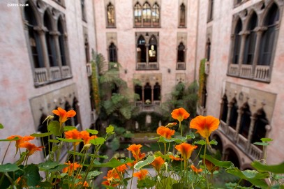 """Nasturtiums are shown in the courtyard during a Friends of Fenway Court Patron Nasturtium Party at the Isabella Stewart Gardner Museum in Boston, Massachusetts Wednesday, April 1, 2015."""