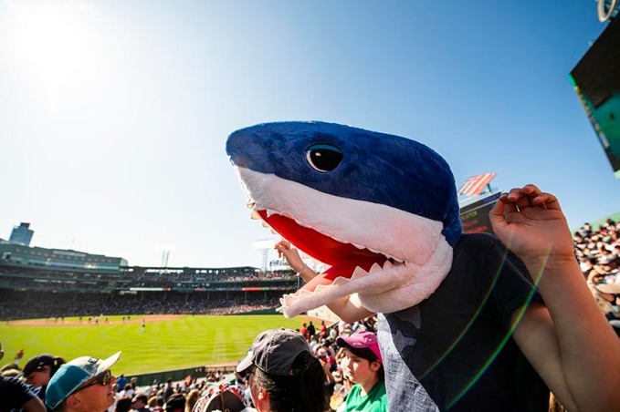 BOSTON, MA - SEPTEMBER 19: A fan cheers as she wears a shark mask during a game between the Boston Red Sox and the San Francisco Giants on September 19, 2019 at Fenway Park in Boston, Massachusetts. (Photo by Billie Weiss/Boston Red Sox/Getty Images) *** Local Caption ***