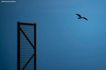 BOSTON, MA - APRIL 2: A bird flies past the foul pole as the sun rises over Fenway Park on what would have been the home opening day for the Boston Red Sox against the Chicago White Sox at Fenway Park on April 2, 2020 at Fenway Park in Boston, Massachusetts. The game was postponed due to the coronavirus pandemic. (Photo by Billie Weiss/Boston Red Sox/Getty Images) *** Local Caption ***
